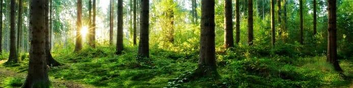 Der Jagdscheinkurs - Beim Waldspaziergang auf Jagdreviere achten