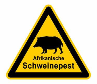 Wachsende Gefahr durch Afrikanische Schweinepest?