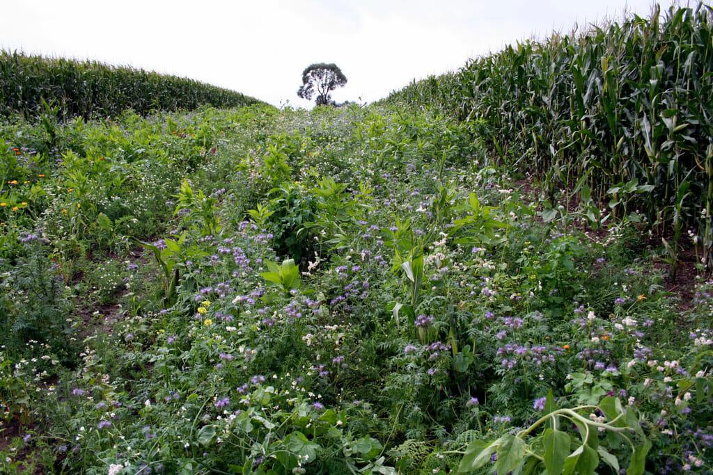 Mehr Biodiversität durch die GAP Reform 2020